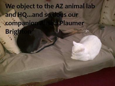 2 individuals(cat,dog) and their companion Alison Plaumer