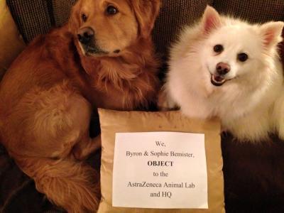 Debbie Bemister and dog friends