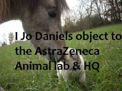 Jo Danielsand animals