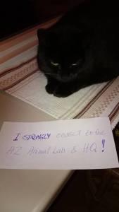 Lotta Stenfelt and cat friend